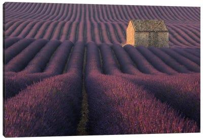 Lavender Fields Of Provence IV Canvas Art Print