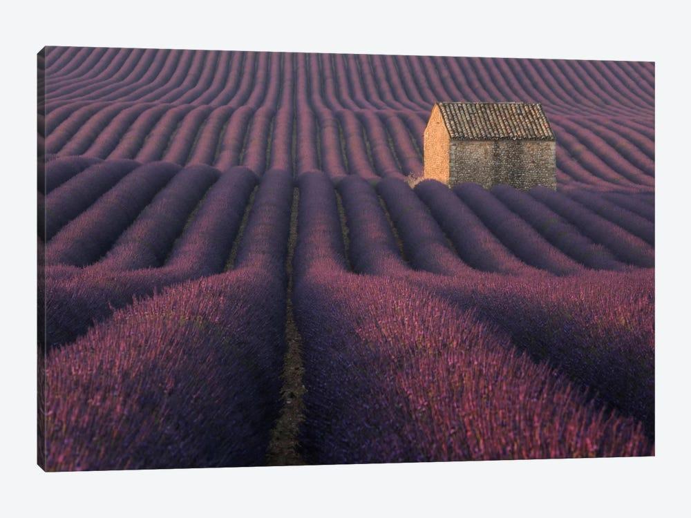 Lavender Fields Of Provence IV by Daniel Kordan 1-piece Art Print