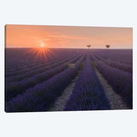 Lavender Fields Of Provence V Canvas Print #KRD52} by Daniel Kordan Canvas Print