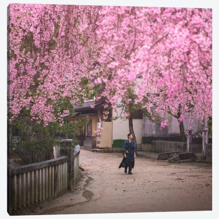 Spring In Japan II Canvas Print #KRD61} by Daniel Kordan Canvas Wall Art