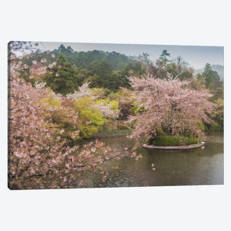 Spring In Japan XVII Canvas Print #KRD76} by Daniel Kordan Canvas Art