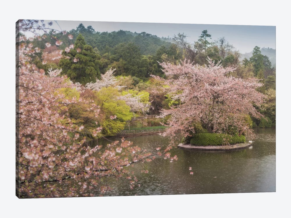 Spring In Japan XVII by Daniel Kordan 1-piece Canvas Art