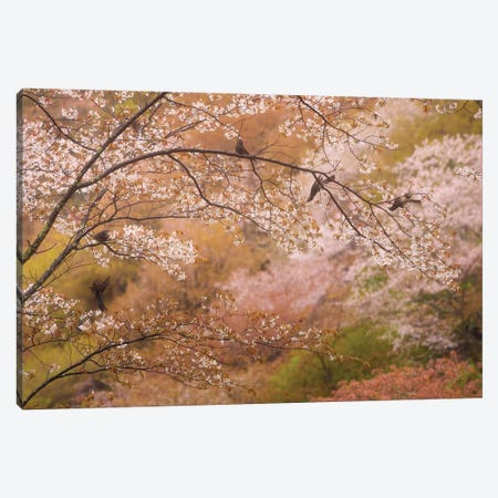 Spring In Japan XXII Canvas Print #KRD81} by Daniel Kordan Canvas Artwork