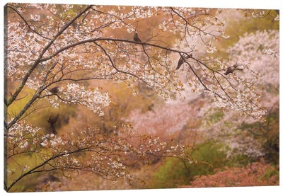 Spring In Japan XXII Canvas Art Print