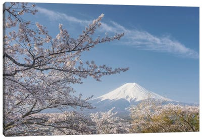 Spring In Japan XXV Canvas Art Print