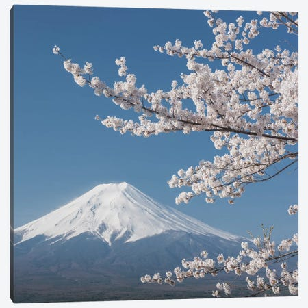 Spring In Japan XXVI Canvas Print #KRD85} by Daniel Kordan Canvas Art Print
