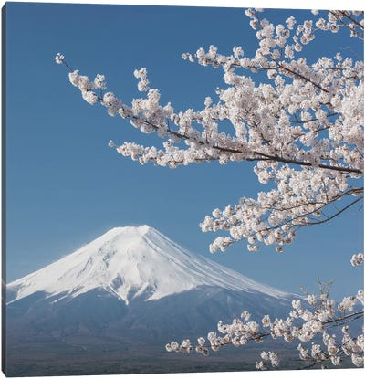 Spring In Japan XXVI Canvas Art Print