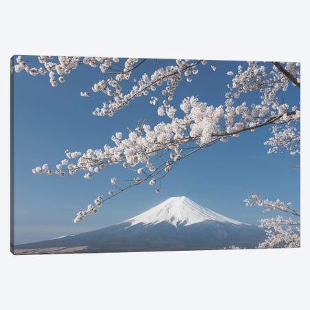 Spring In Japan XXVII Canvas Print #KRD86} by Daniel Kordan Canvas Print