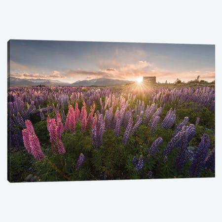 Spring In New Zealand III Canvas Print #KRD90} by Daniel Kordan Canvas Art Print