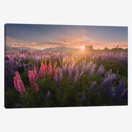 Spring In New Zealand IV Canvas Print #KRD91} by Daniel Kordan Canvas Art Print
