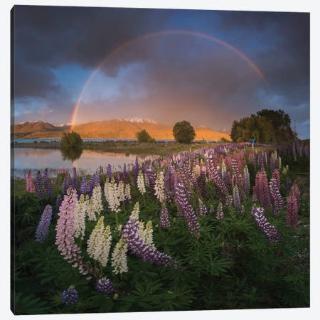 Spring In New Zealand VII Canvas Print #KRD94} by Daniel Kordan Canvas Art