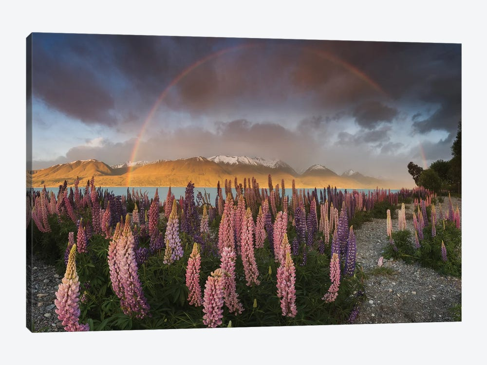 Spring In New Zealand VIII 1-piece Canvas Art Print