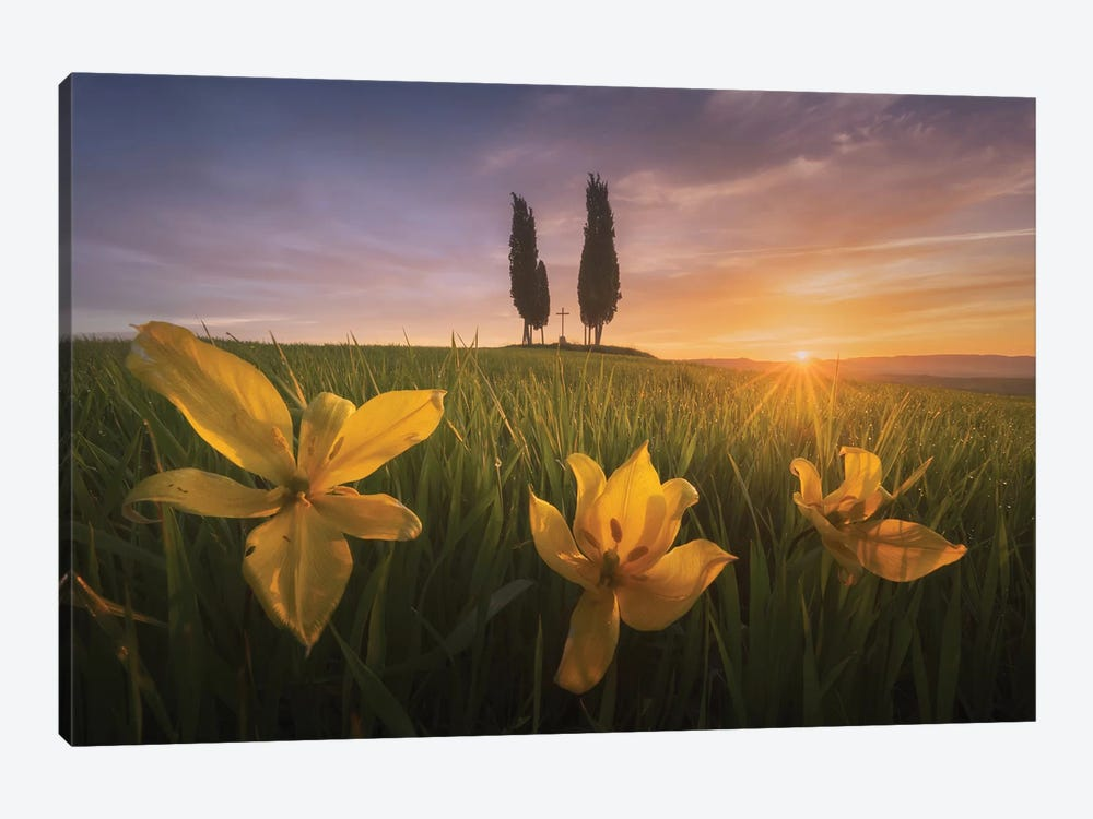Spring In Tuscany I by Daniel Kordan 1-piece Canvas Print