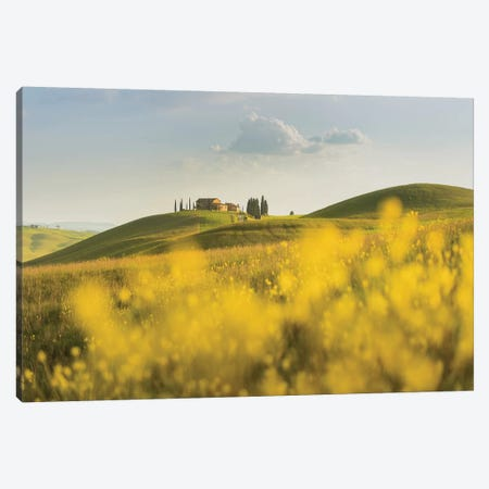 Spring In Tuscany II Canvas Print #KRD98} by Daniel Kordan Canvas Print
