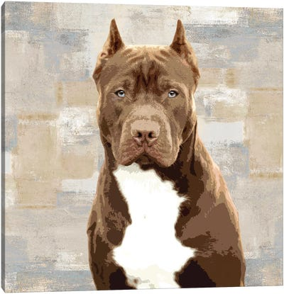 Pit Bull Canvas Art Print