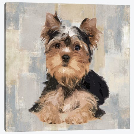 Yorkshire Terrier Canvas Print #KRO17} by Keri Rodgers Canvas Art Print