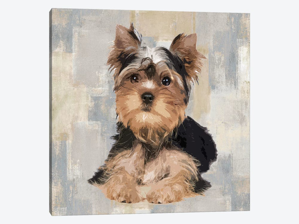 Yorkshire Terrier by Keri Rodgers 1-piece Canvas Art