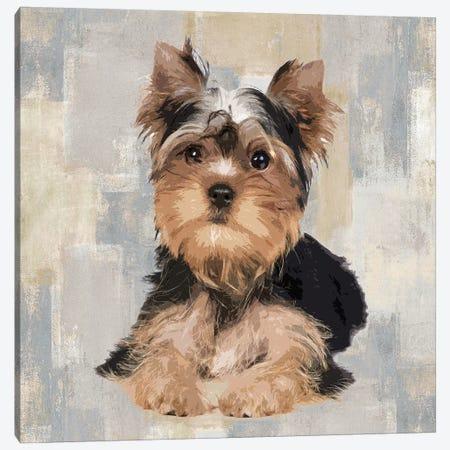 Yorkshire Terrier Canvas Print #KRO17} by Keri Rodgers Canvas Art Print