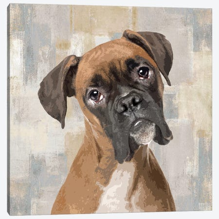 Boxer Canvas Print #KRO2} by Keri Rodgers Art Print
