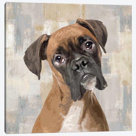 Boxer Canvas Print #KRO2} by Keri Rodgers Art Print