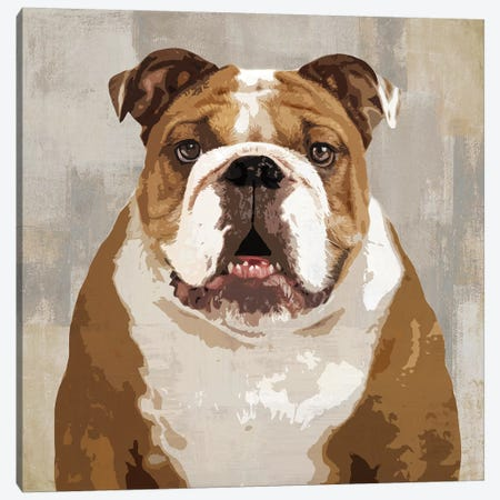 Bulldog Canvas Print #KRO3} by Keri Rodgers Canvas Art Print