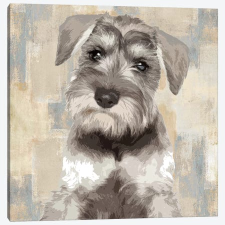 Miniature Schnauzer Canvas Print #KRO9} by Keri Rodgers Canvas Print