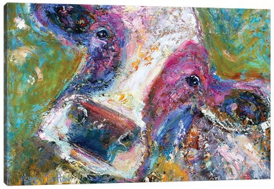 Colorful Cow II Canvas Art Print