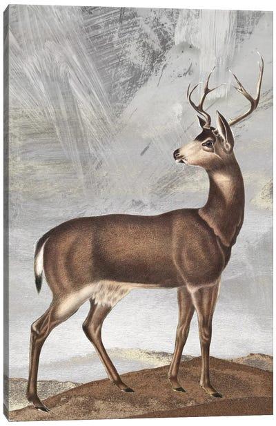 Posing Deer II Canvas Art Print
