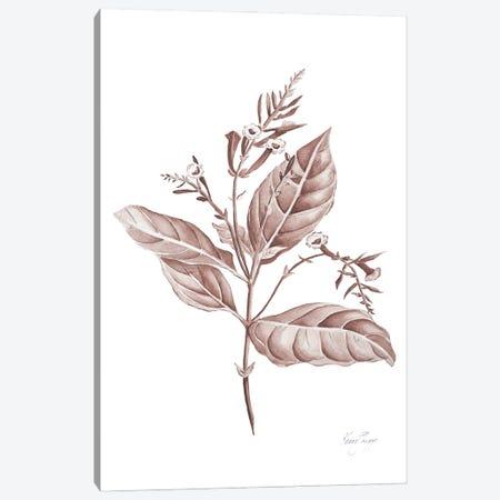 Botanical Study I In Blush Canvas Print #KSP11} by Kerri Shipp Canvas Artwork