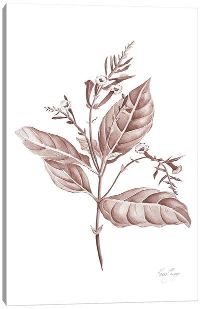 Botanical Study I In Blush Canvas Art Print