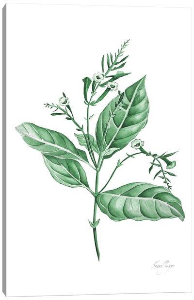 Botanical Study I In Green Canvas Art Print