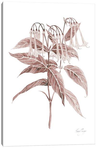 Botanical Study II In Blush Canvas Art Print