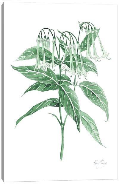 Botanical Study II In Green Canvas Art Print