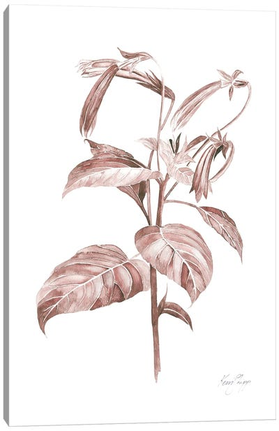 Botanical Study III In Blush Canvas Art Print