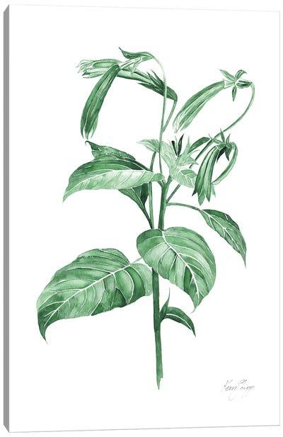 Botanical Study III In Green Canvas Art Print