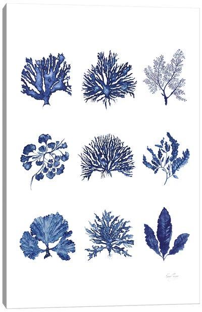 Denim Coral Collection Canvas Art Print