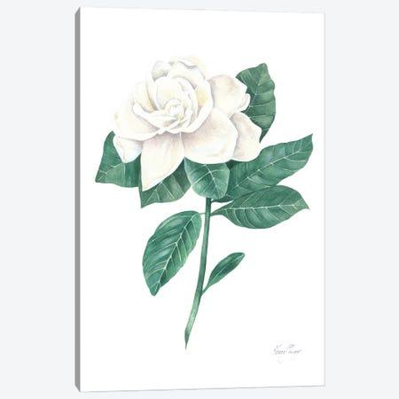 Gardenia Canvas Print #KSP52} by Kerri Shipp Canvas Wall Art