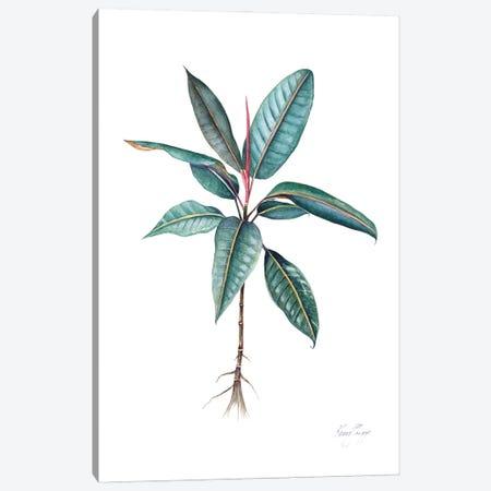 Moreton Bay Fig I Canvas Print #KSP63} by Kerri Shipp Canvas Art Print