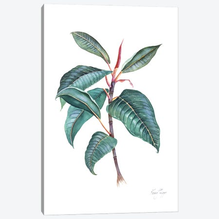 Moreton Bay Fig II Canvas Print #KSP64} by Kerri Shipp Canvas Artwork