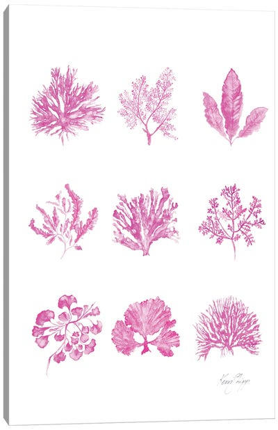 Coral Collection In Pink Canvas Art Print
