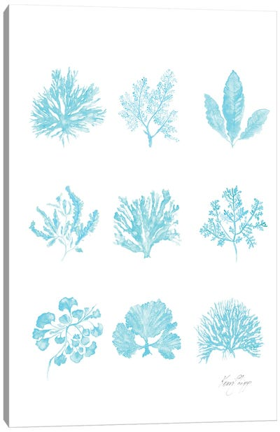 Coral Collection In Turquoise Canvas Art Print