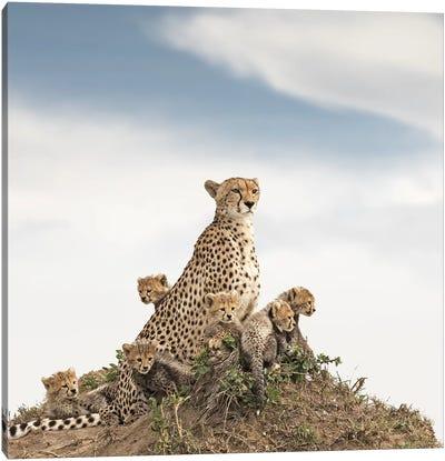 Color Cheetah & Cubs Canvas Art Print