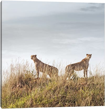 Color Cheetah Duo Canvas Art Print