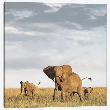 Color Elephant & Calves Canvas Print #KTI14} by Klaus Tiedge Canvas Art Print