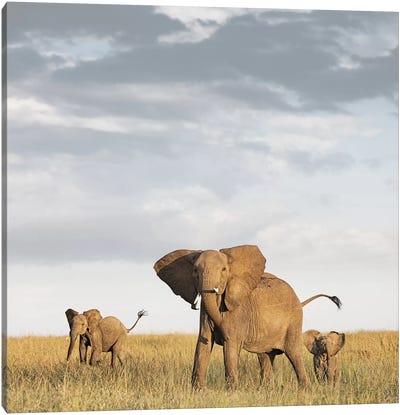 Color Elephant & Calves Canvas Art Print