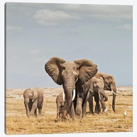 Color Elephant Herd Canvas Print #KTI15} by Klaus Tiedge Canvas Art Print