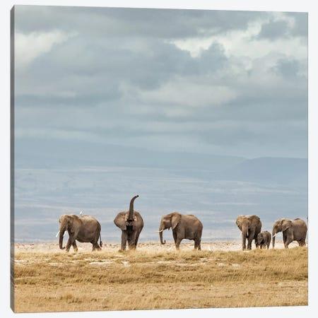 Color Elephant Herd Canvas Print #KTI16} by Klaus Tiedge Canvas Art Print