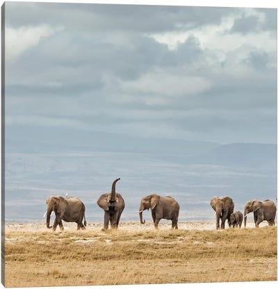 Color Elephant Herd Canvas Art Print