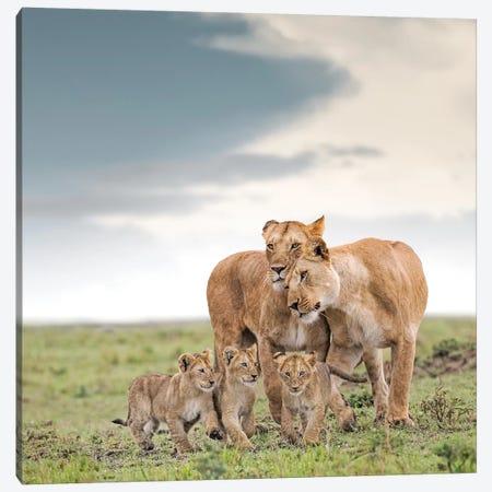 Color Lioness & Cubs Canvas Print #KTI19} by Klaus Tiedge Canvas Art