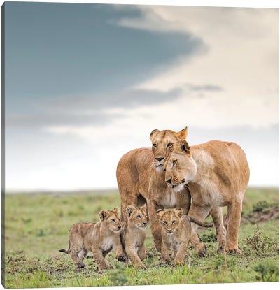 Color Lioness & Cubs Canvas Art Print